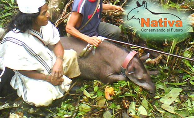 Nativa Foundation Uses Dan-Inject Dart Guns